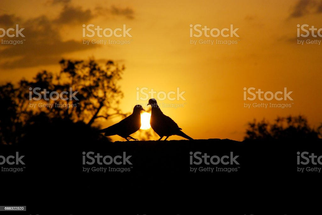 sweet kiss in evening stock photo