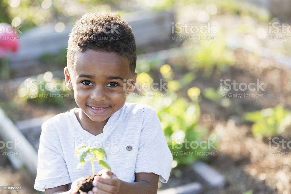 Sweet little boy holding seedling stock photo