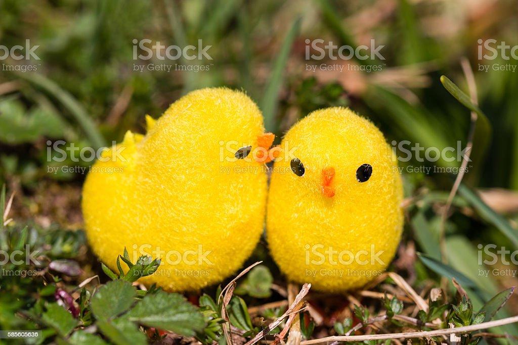 sweet little chicken stock photo