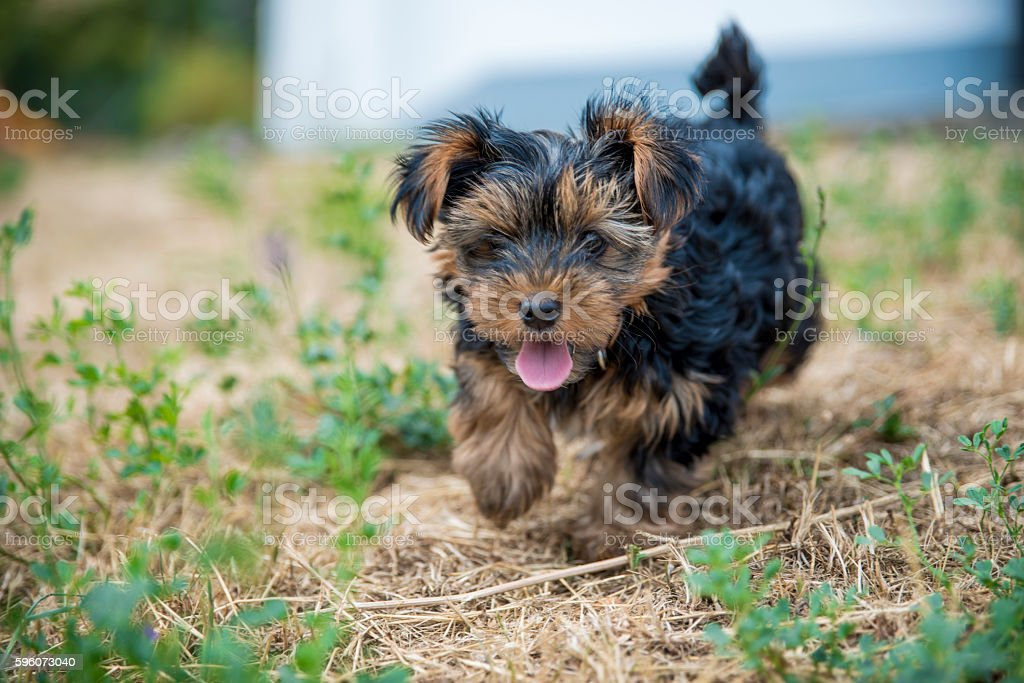 Sweet little doggie stock photo