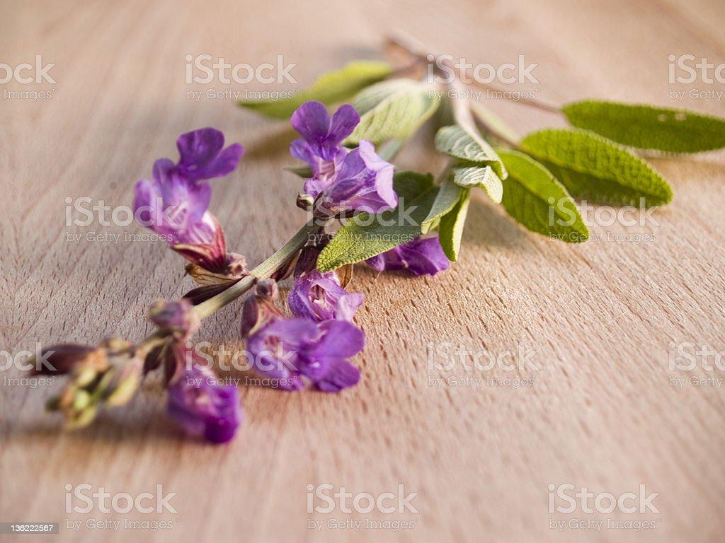Sweet Marjoram Bloom stock photo