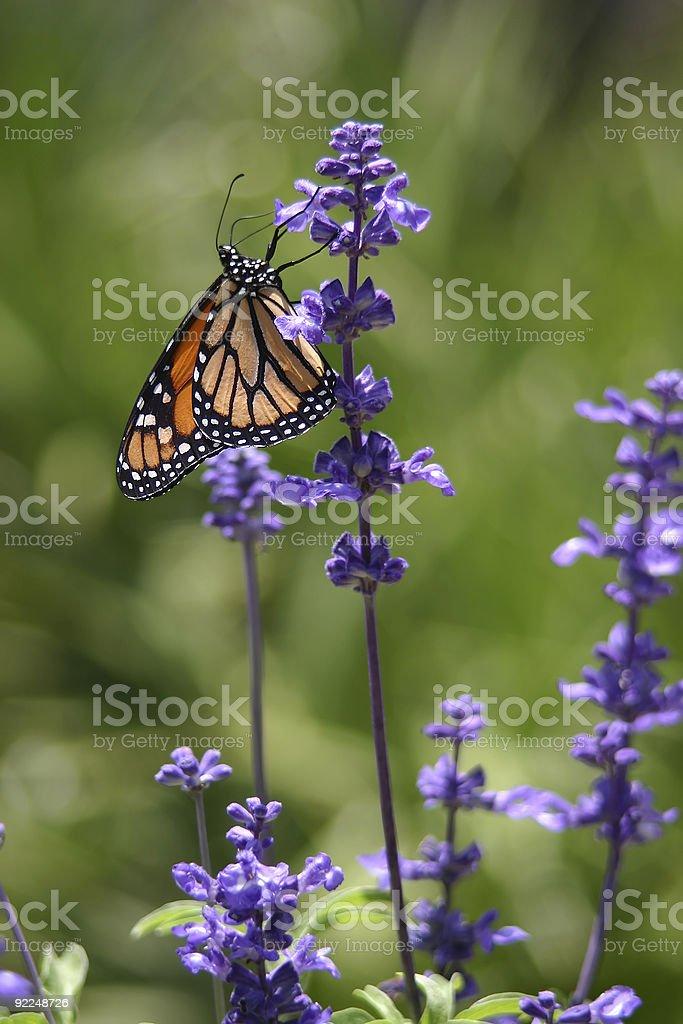 Sweet Nectar photo libre de droits