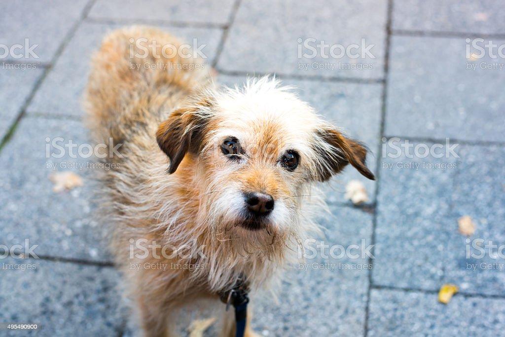 sweet old dog stock photo