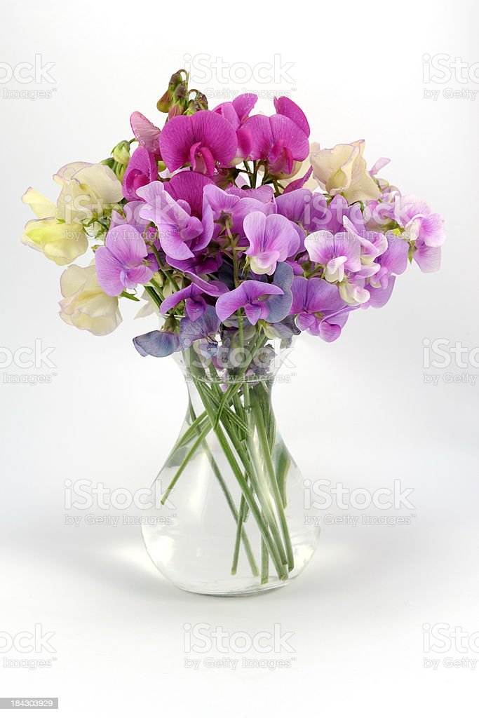 Sweet peas in a vase stock photo