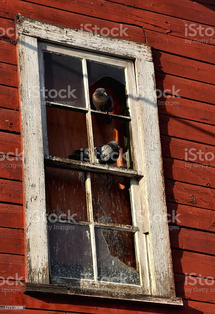 sweet pigeon home royalty-free stock photo