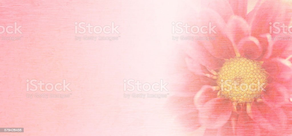 Sweet pink chrysanthemums flowers with mulberry paper texture. stock photo