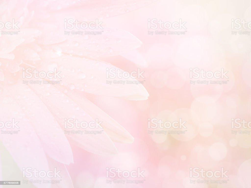 Sweet pink Gerbera flower background 2 stock photo
