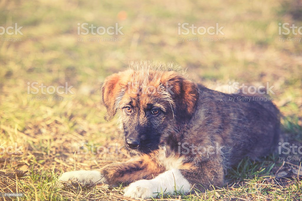 sweet portrait of young dog on grass stock photo