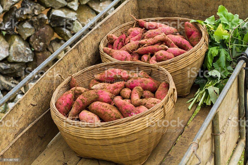 Sweet potatoes stock photo