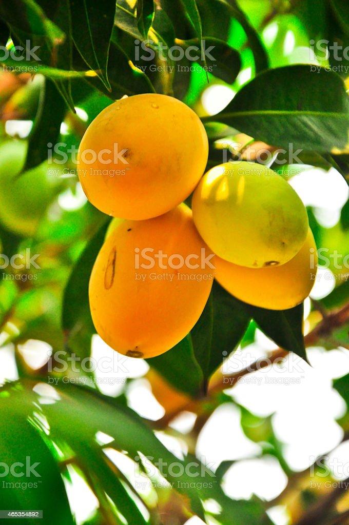 sweet yellow Marian plum ,Plum mango at thailand stock photo