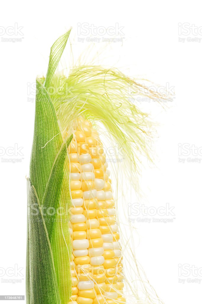 Sweetcorn, Corn on the Cob with Silk, Husk Freshly Peeled stock photo