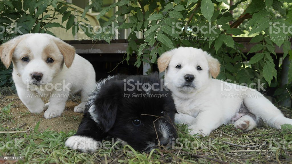 sweetie puppies stock photo