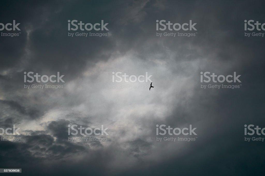 Swifts Birds in the sky stock photo