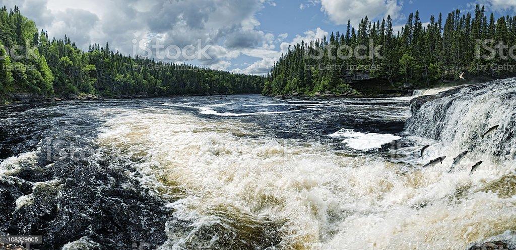 Swim Upstream stock photo