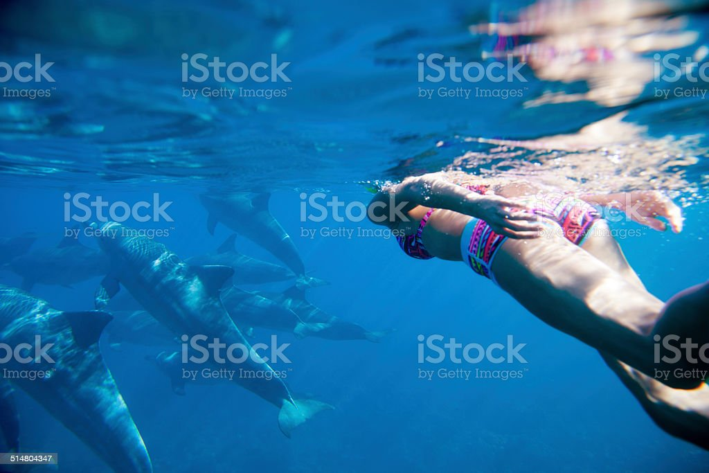 Swiming in the Indian ocean with dolphins stock photo