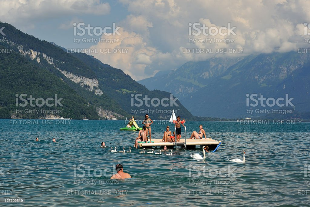 Swimmers and Swans royalty-free stock photo