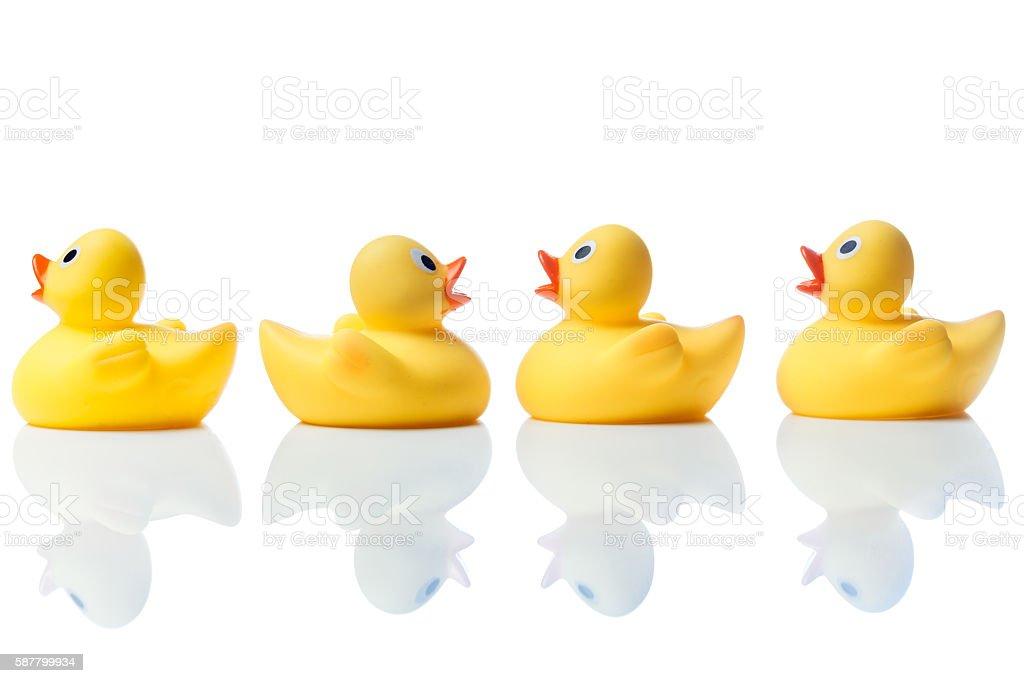 Swimming against the stream, rubber ducks on white stock photo