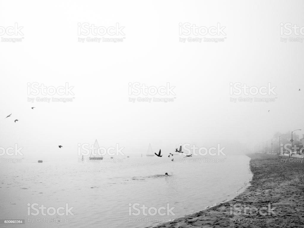 Swimming at foggy Bay Shore Beach - Long Beach, CA stock photo