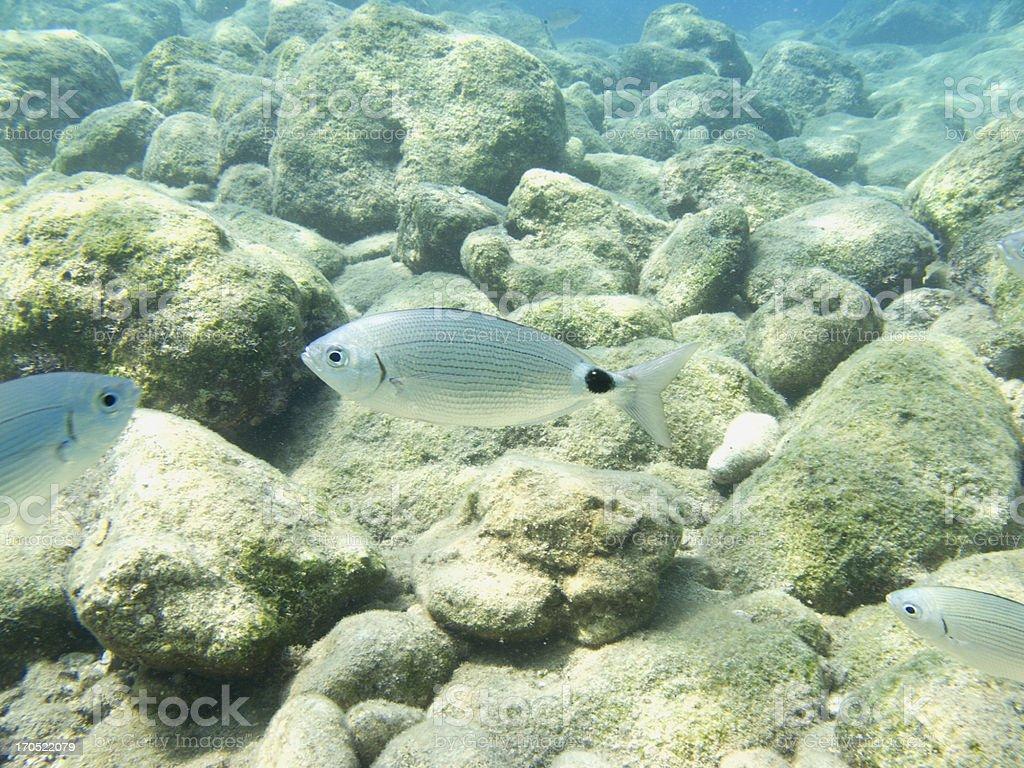 Swimming Fish Close-Up stock photo