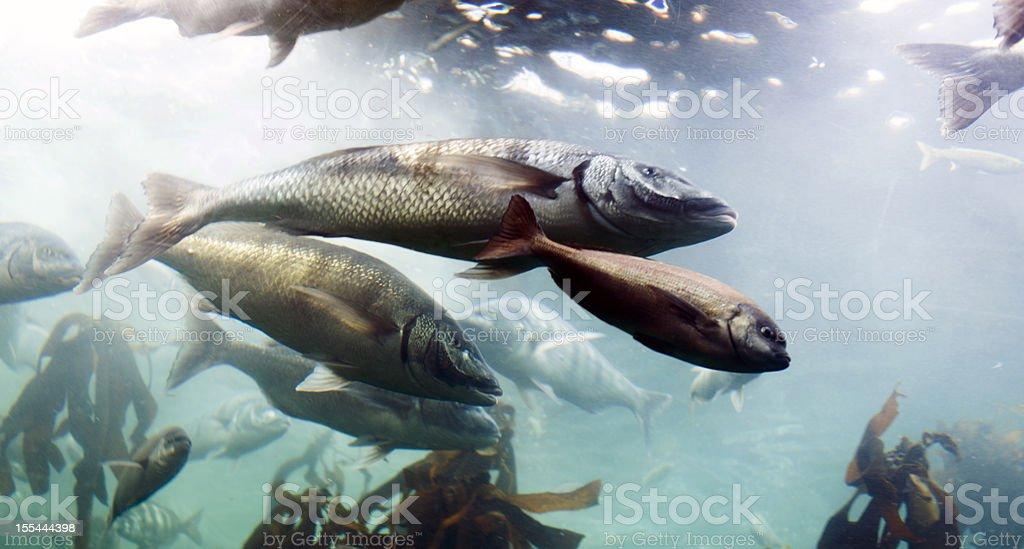 Swimming fish in aquarium stock photo