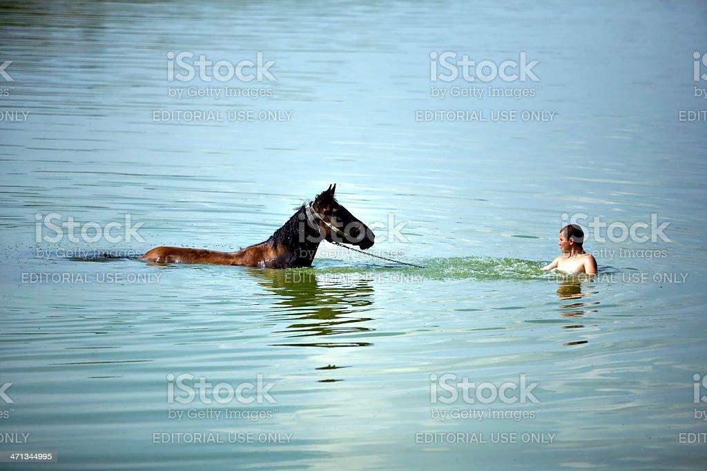 Swimming horse stock photo