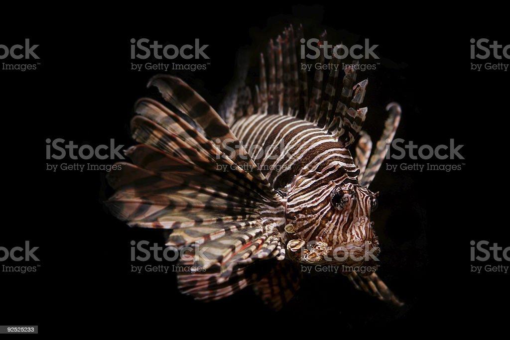 Swimming in the Dark stock photo