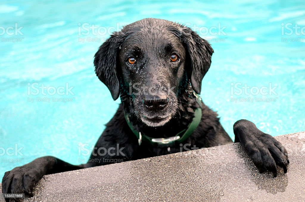 swimming lab stock photo