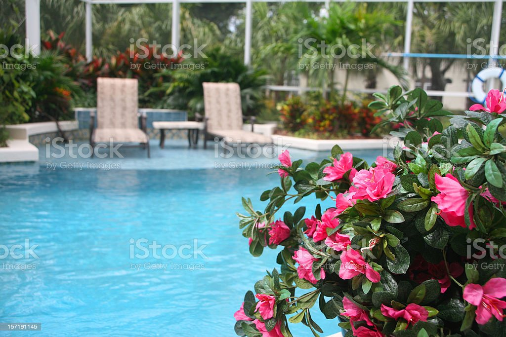 Swimming Pool with Flowers royalty-free stock photo