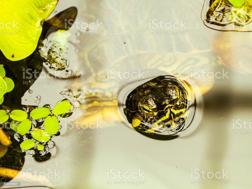 Der Turtle Lizenzfreies stock-foto