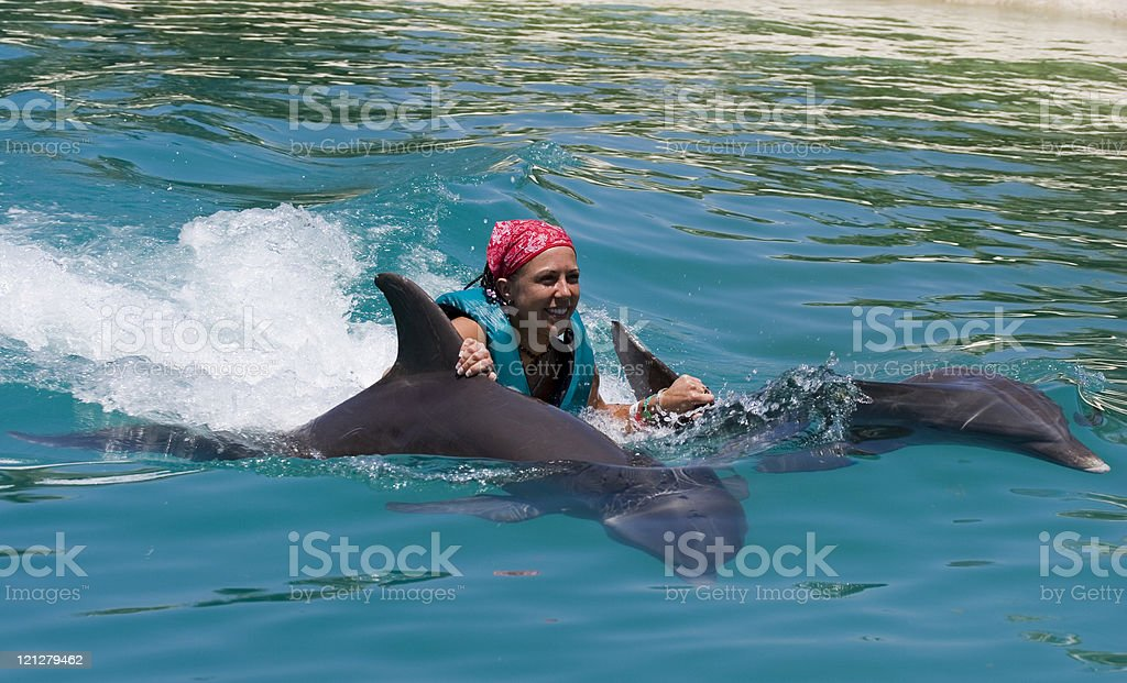 Swimming with the Dolphins stock photo