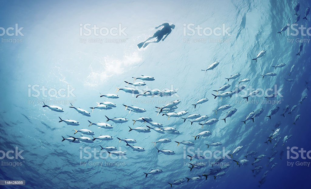 Swimming With The Fishes stock photo
