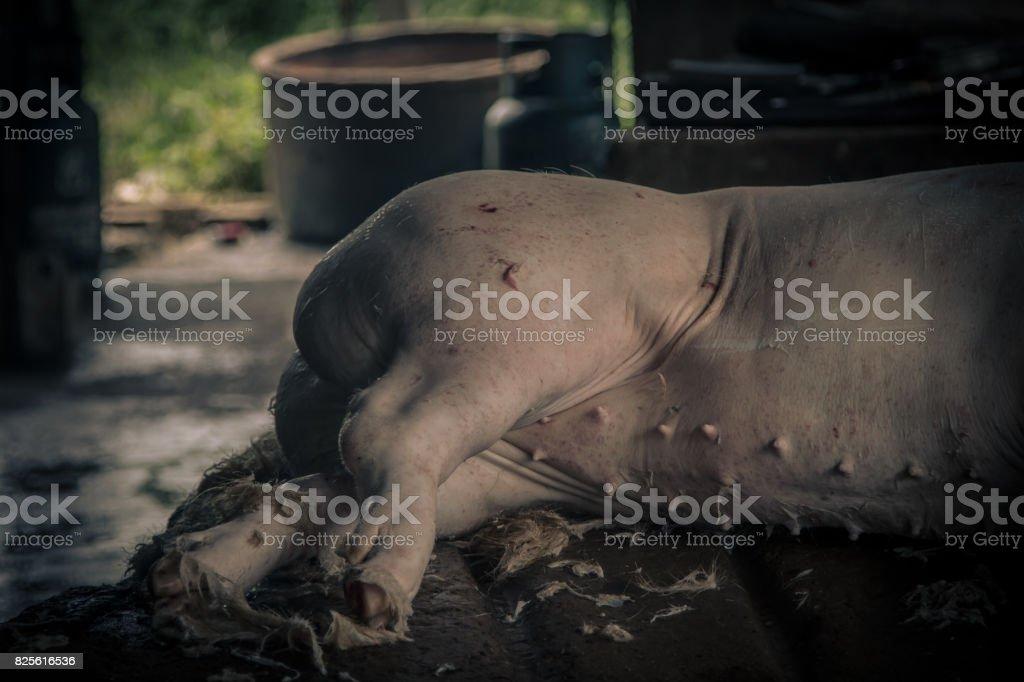 Swine slaughterhouse uses hot water for swine breeding in Thailand. stock photo
