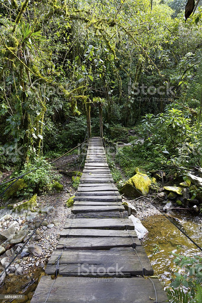 Swing Bridge in the rain forest royalty-free stock photo