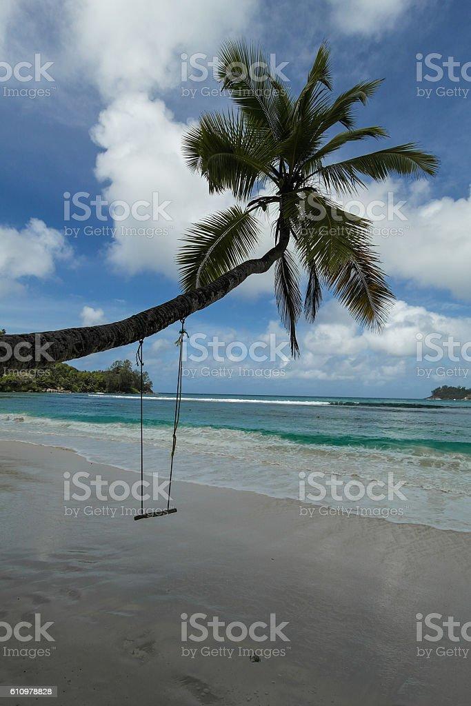 Swing on a coconut tree - Seychelles Islands stock photo