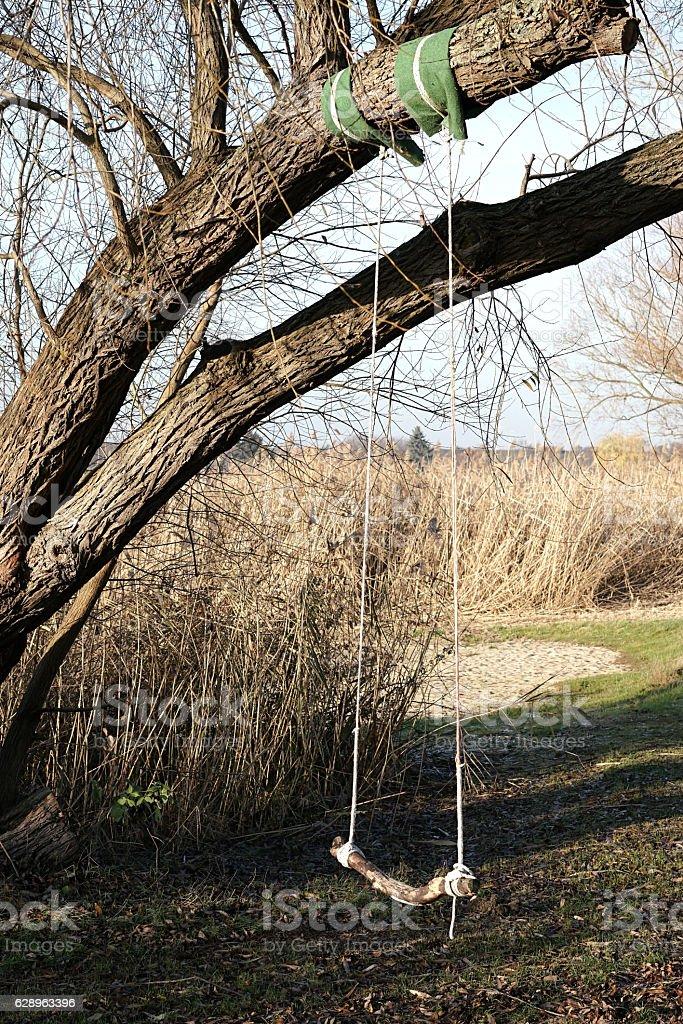 Swing on a tree stock photo