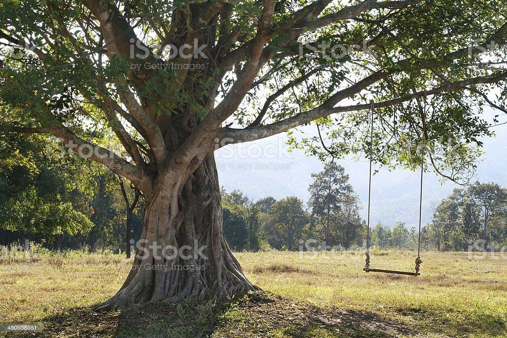 swing on tree, nobody stock photo