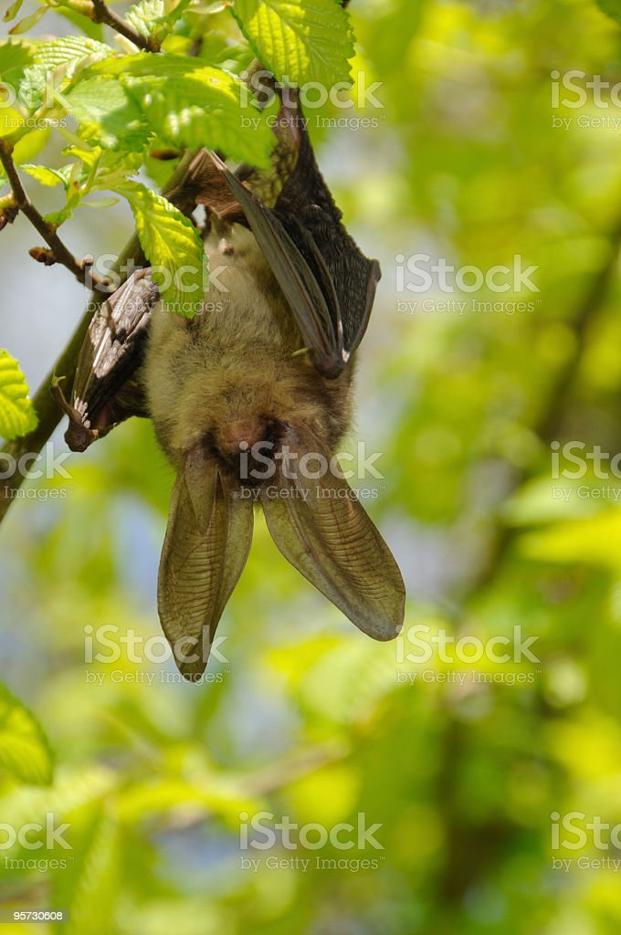 Swinging bat stock photo