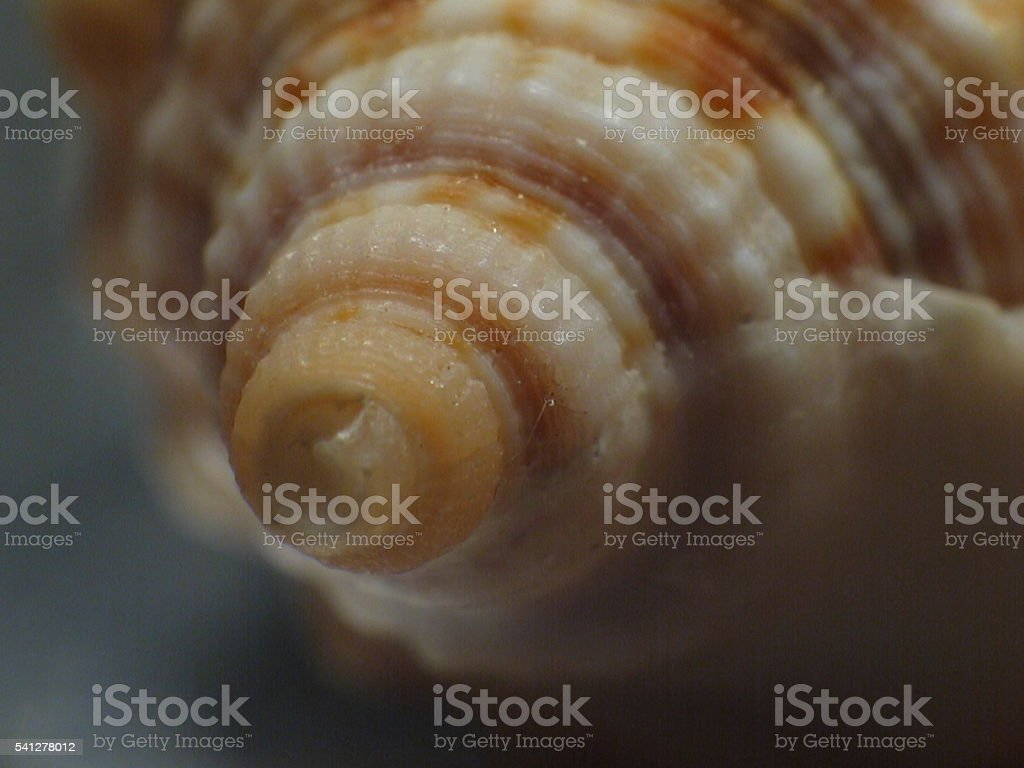 Swirl of a seashell stock photo