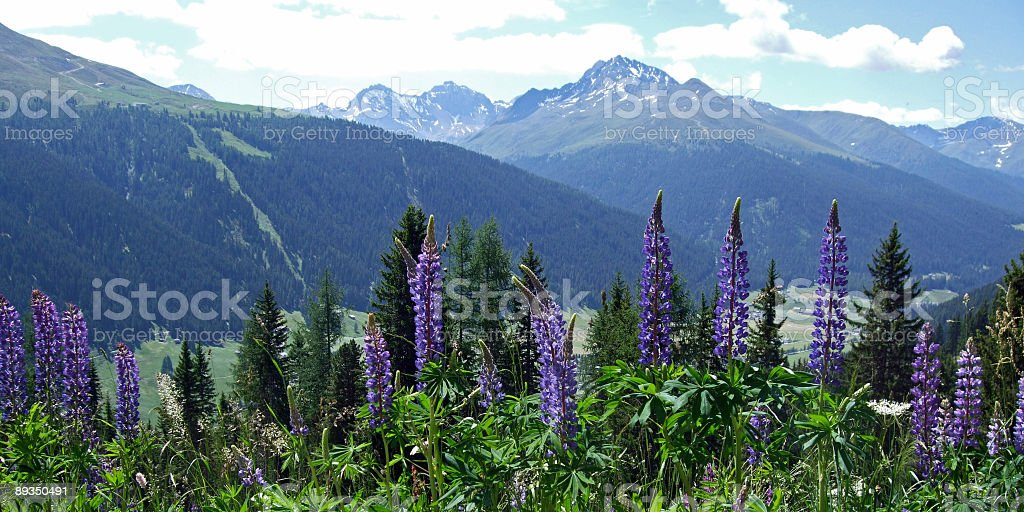 Swiss Alps in Summer royalty-free stock photo