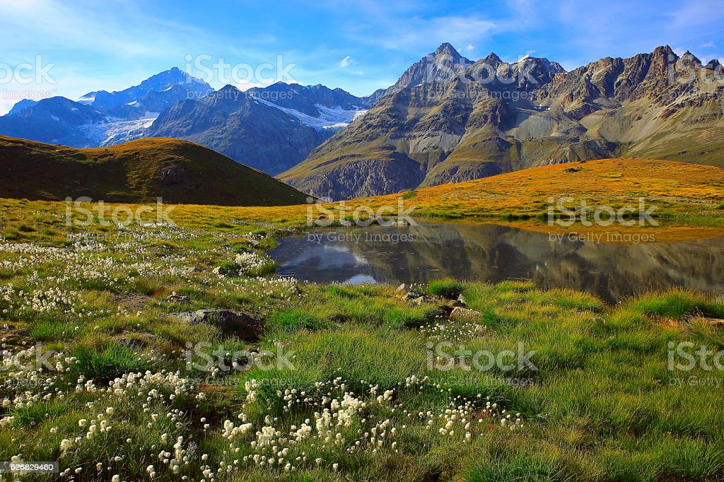 Swiss alps landscape: Alpine Lake reflection, cotton wildflowers meadows, Zermatt stock photo