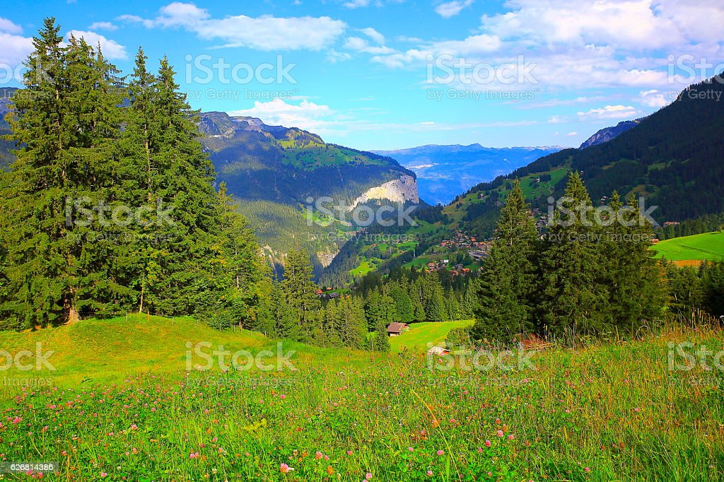 Swiss alps landscape: Wengen village, springtime wildflowers above Lauterbrunnen valley stock photo