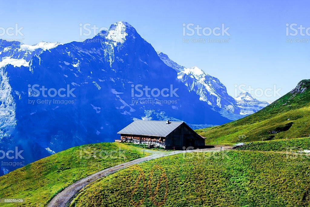 Swiss beauty, meadows under Jungfrau stock photo