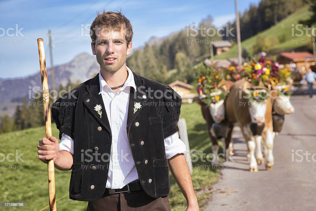 Swiss cowboy in traditional gear leading his decorated cattle stock photo