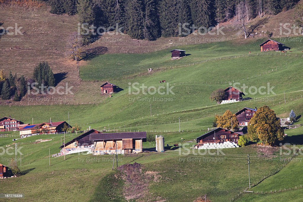 Swiss Farm on Alp in Evening Sunlight royalty-free stock photo
