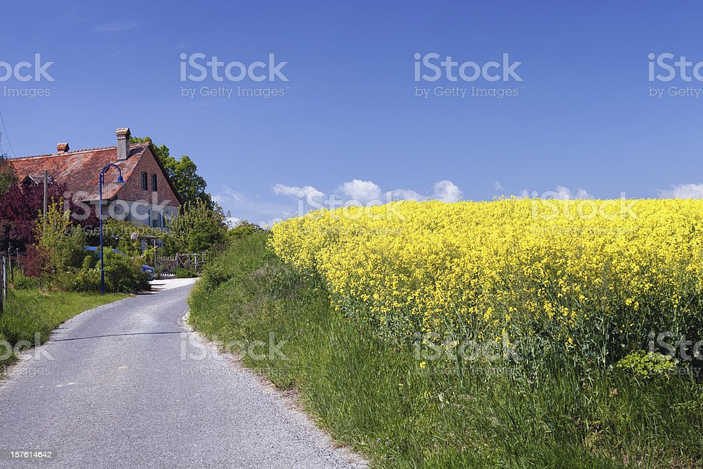 Swiss Farmhouse and Field of Rapseed, Colza stock photo