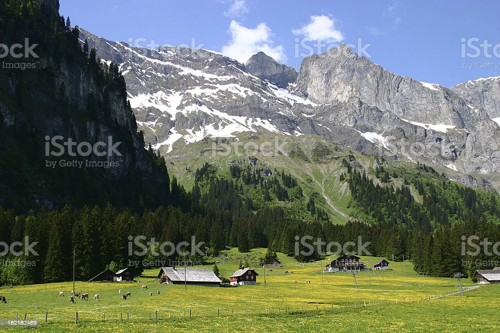 Swiss Farms royalty-free stock photo