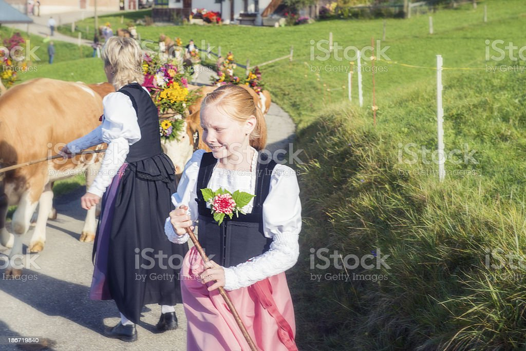 Swiss Females Lead Cattle Down the Mountain stock photo