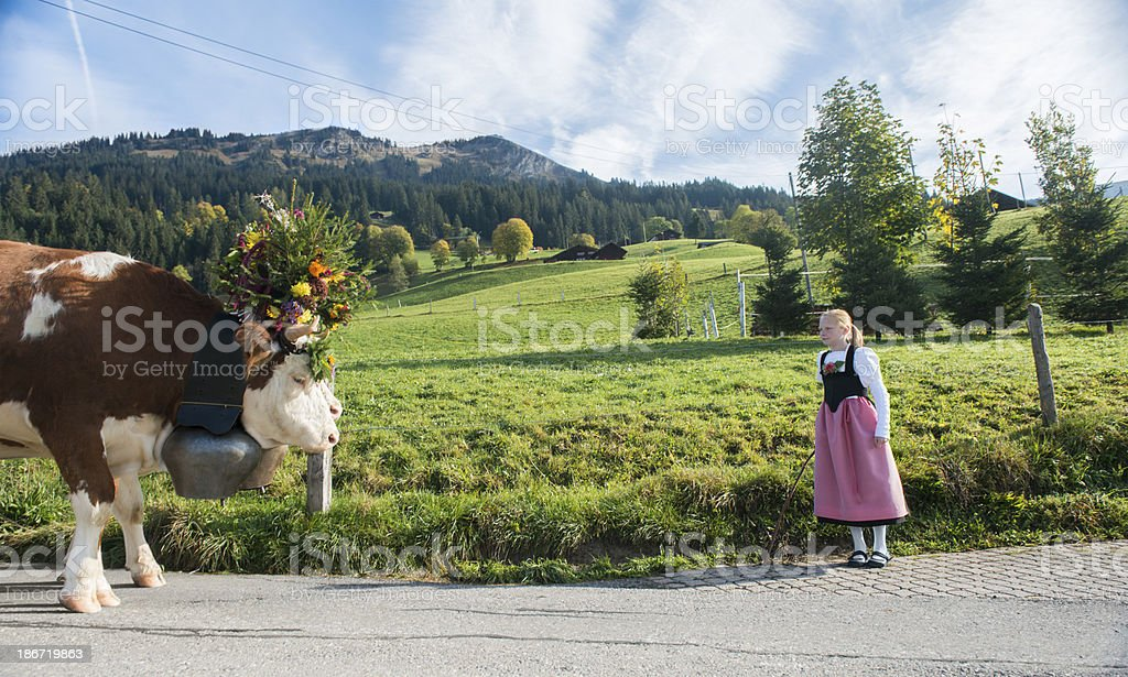 Swiss Girl stands with Cows stock photo