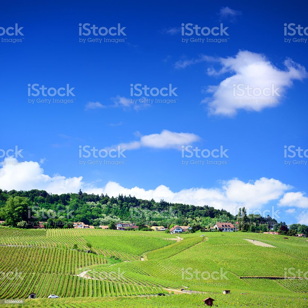 Swiss Hillside Vineyards stock photo