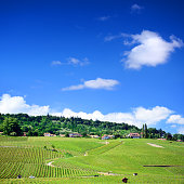 Swiss Hillside Vineyards
